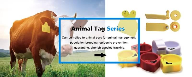 animal ear tag