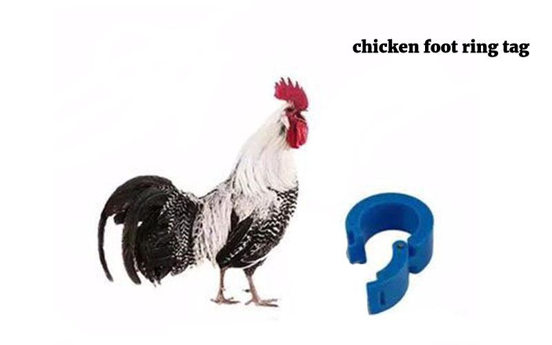 chicken foot ring tag