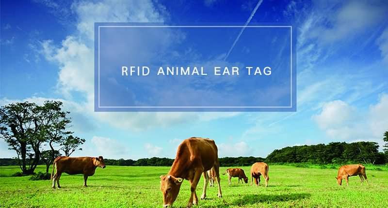 ear tag application